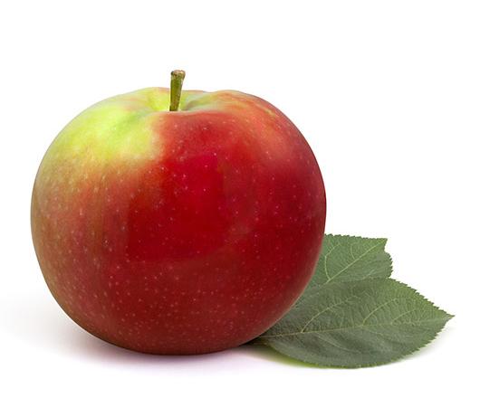 Mcintosh pommes qualit qu bec - Comment detartrer une pomme de douche ...